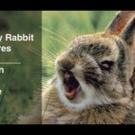 Funny Rabbit Pictures – 47 Rabbits in 60 Seconds