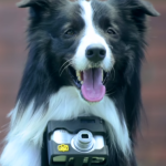 Turn Your #Dog into a Pho-DOG-rapher Photographer [video]