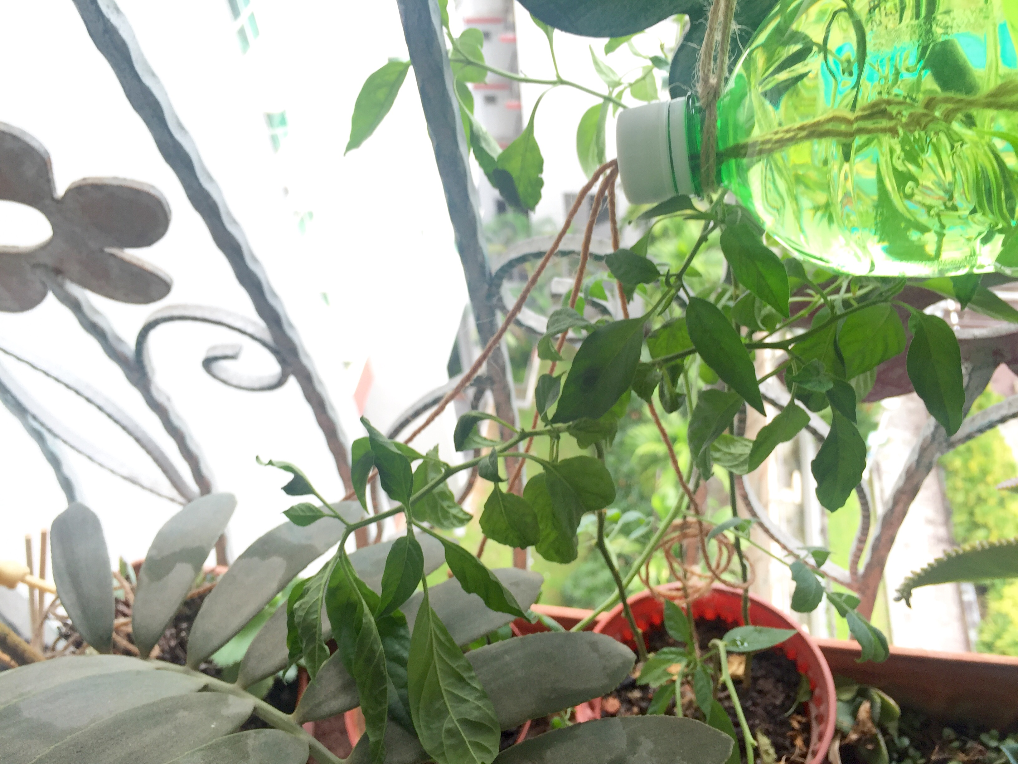 DIY Drip Feeder for Plants